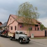 Der Maibaum wird auf einem historischen Fahrzeug durchs Dorf gefahren.